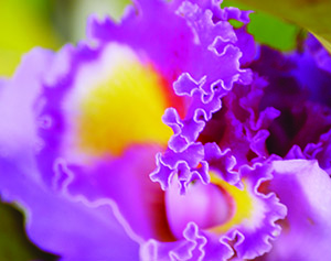 There are more than 25,000 species of orchids — more than any other flower.