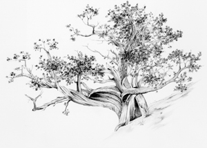 """Then I hear the old tree whisper, """"Look into my life, and you will learn much."""""""