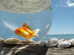 Freedom can seem more threatening than our fishbowls when we do not know it is safe to make mistakes.