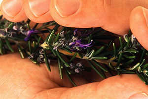Rosemary's memorable flavor and unique health benefits make it an indispensable herb for every kitchen.