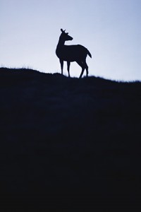 """Yesterday, a deer strutted across my street. She stopped to gaze at me with the look of a creature who has never paid rent and never known shame. She had a saucy attitude and held my gaze for longer than was comfortable. """"I don't own the street,"""" she seemed to proclaim, """"but neither do you."""""""