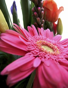 The most effective plants with some of the highest purification abilities include gerbera daisies, peace lilies, chrysanthemums, bamboo and English ivy.