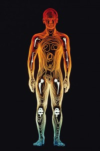 The spleen is one of the major chakras of the pranic healing system and is actually a major entry point for prana.