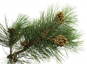 Banish unproductive guilt with Pine