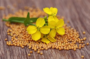 Mustard seeds are rich in phytonutrients called isothiocyanates, which have been studied for their anti-cancer benefits.